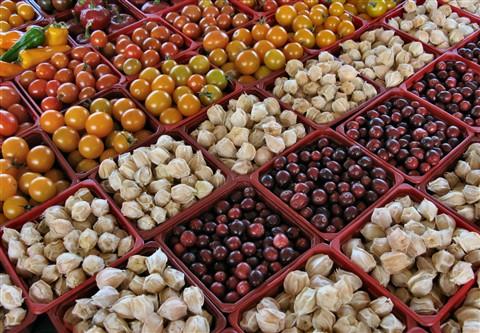 Berries2_4288