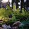 Ferns at 75mm 2