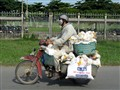 Ducks to market - Vietnamese style