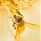 pollen fest-1