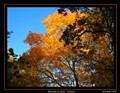 Autumn in Jura