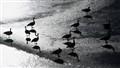 Icebirds