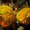 Fine art Pumpkins. PB011275