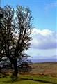 Dartmoor-0064