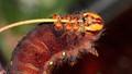 Satisfying may hunger. Moth caterpillar.