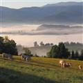 pastorale pasture