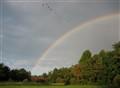 rainbows, geese