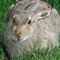 Jack Rabbit 4