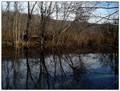 Brick Pond Reflections