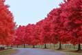 Fall On Poplar Hill