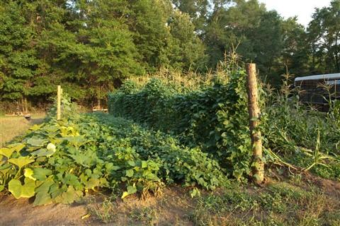 _garden 2mos Canon copy