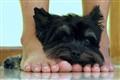 Foot Fetishist