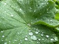 Green, after the rain