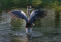 See my wings