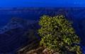 Pinyon pine illuminated by flashlight at Cape Royal, North Rim, Grand Canyon National Park, Arizona