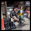 Tibetan Cobbler