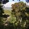 Gollans Valley - Flowering Rata