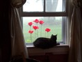 Poppy& the poppies