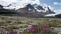 Columbia Ice Fields Jasper Alberta_