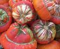 Turban Gourd