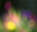 Wrong settings (slow shutter speed and manual focus) yielded some out of focus Spring flowers
