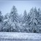 Winter_im_Hochtaunus