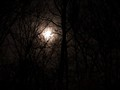 Witchwood Moon...