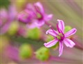 tiny flower dpreview 02-2012