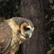 birds of prey nov 2013-1100