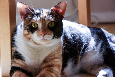 Miss Kitty-1