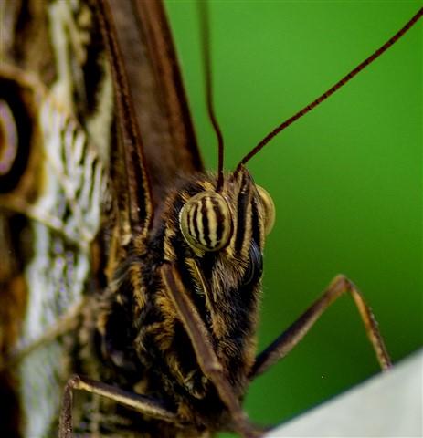 (Bug) Eyed....