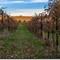 Sanders Ridge Winery - vineyards view