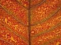 A leaf of autumn