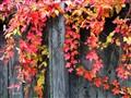 Autumn_'10
