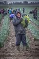 Dahlia Harvest in Spring Rain-1