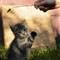 Koty [Czerwiec 11] 014b