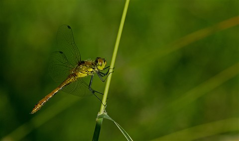 dragonfly in green habitat