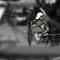 DSC_1617_filtered
