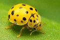 Yellow and spotted