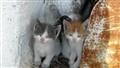 2 kitten  !