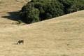 Quiet Pasture