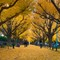 Fall Colors Tokyo