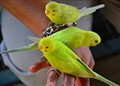 Three Birds In The Hand....