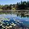 Sweeny Pond