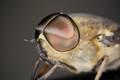 Fly's Eyes