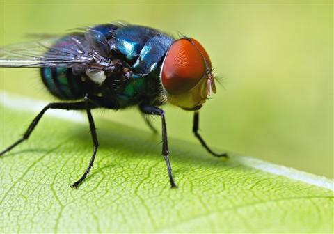fly202