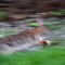Picasso's Speeding Rabbit