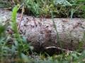 Garden Ants Strolling Around