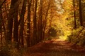 Autumnal Forest Path