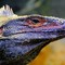 Reptile beauty